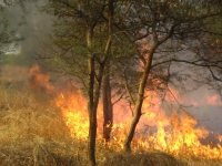 Workshop on Wildfire Management and Monitoring in Sudan October, 30, 2018